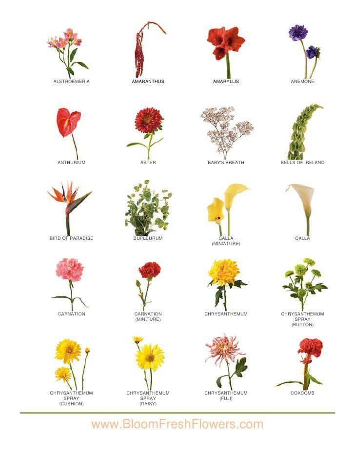 Iii Bloom Fresh Flowers Flower Images Flower Names Types Of Flowers Flower Guide