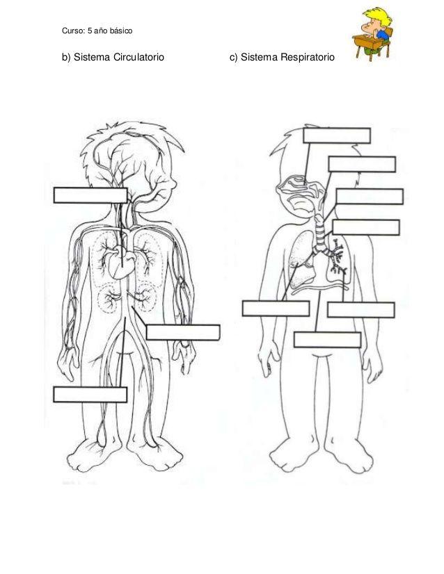Guía de aprendizaje sistemas del cuerpo humano | esc | Pinterest ...