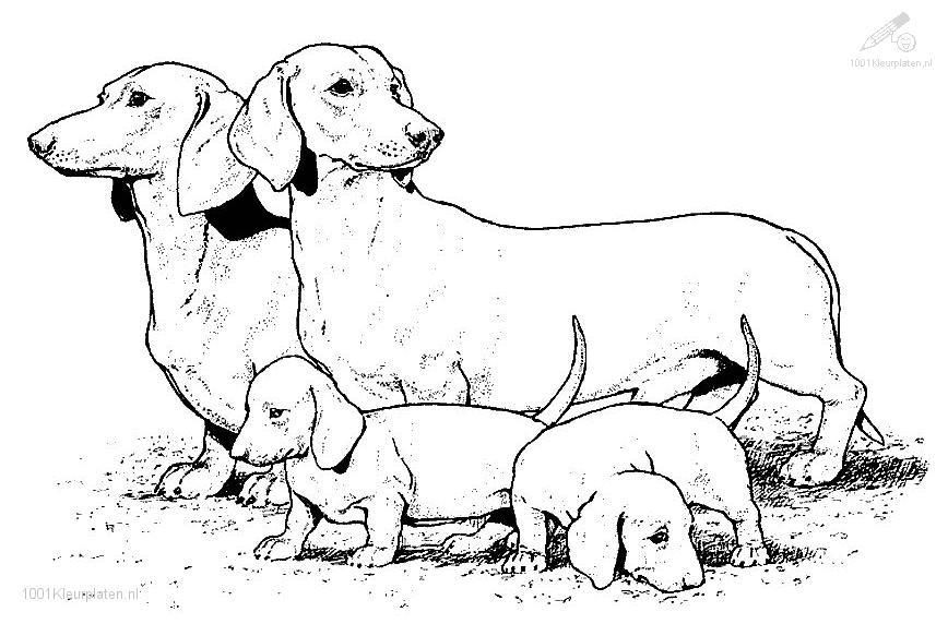 dog coloring pages: Animal Coloring Animals >> Dog >> Dog Coloring ...
