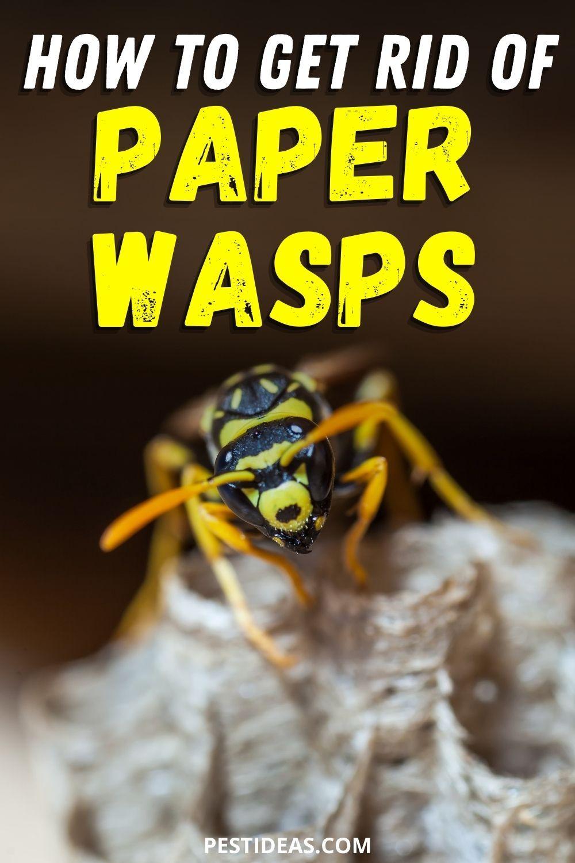 01ba4ca3e7019992d9bbe59ec7aa4f4e - How To Get Rid Of Small Paper Wasp Nest
