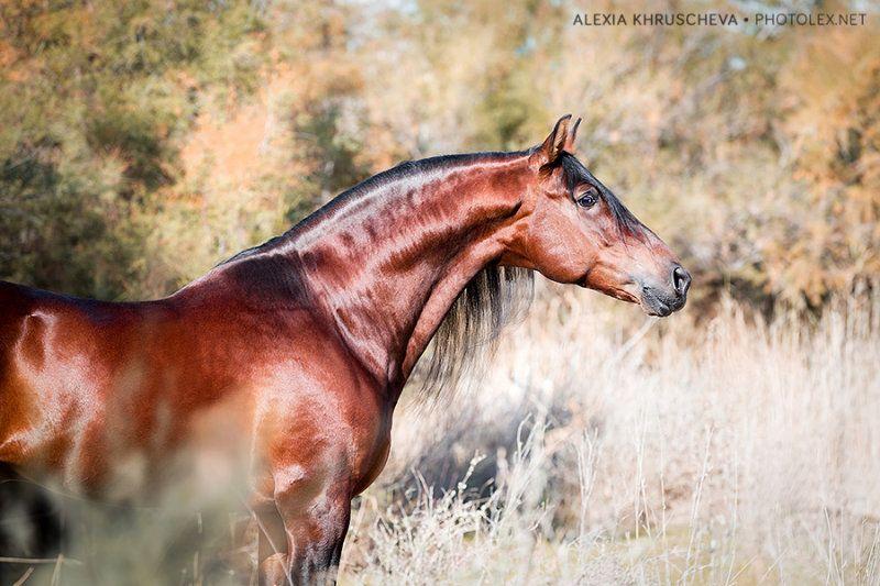 Испания Автор: Alexia Khruscheva   Андалузская лошадь ...