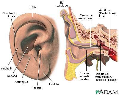 What are the signs and symptoms of ear infection middle ear what are the signs and symptoms of ear infection ccuart Choice Image