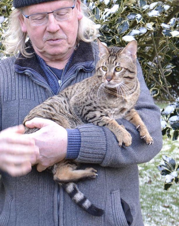 Prickly Paws loves a cuddle Savannah kitten, Savannah