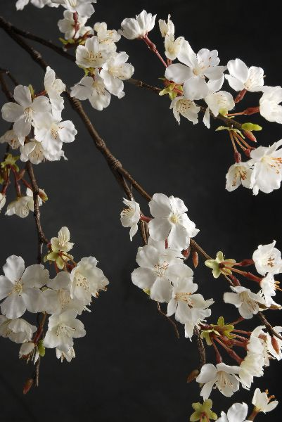 42 Cherry Blossom Branches 7 99 Each 3 For 7 Each Flower Arrangements Cherry Blossom Branch Flowers