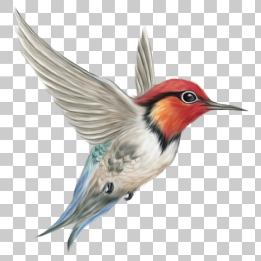 Kingfisher Png Image With Transparent Background Hummingbird Illustration Light Background Images Png Images