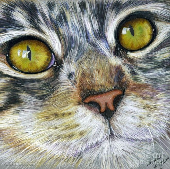 30 beautiful cat drawings best color pencil drawings and paintings - Color Drawings