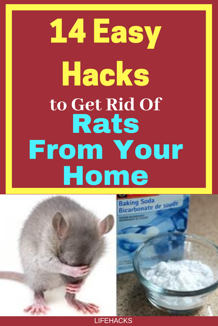 14 Easy Hacks to Get Rid of Rats From Your Home | Getting