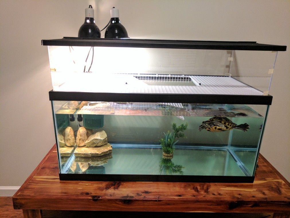 Turtle Aquarium With Home Made Basking Platform Using Egg Crate