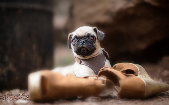 Download Wallpapers Pug Small Puppy Cute Animals Beige Dogs Small Animals Besthqwallpapers Com Perros Doguillo Animales Lindos Animales Pequenos