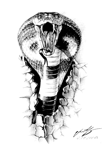 Animales Serpiente Cobra Snake Sketch Cobra Tattoo Snake Drawing
