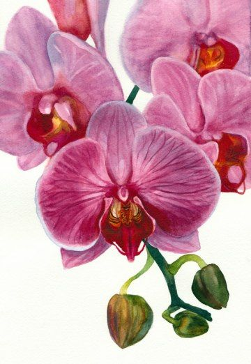 Orchid painting in watercolor, 8.5 x 11.5