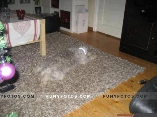 Is that a dog? - Click Here to view in larger Resolutions  http://funyfotos.com/funny-photos/is-that-a-dog/