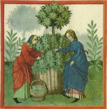"""Résultat de recherche d'images pour """"jardin moyen age enluminure"""""""