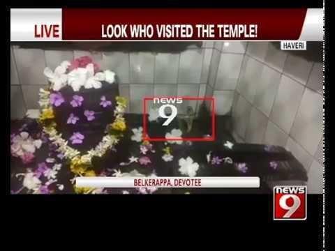 Snake Spotted in Inner Sanctum of Temple in Haveri  NEWS9 https://t.co/AojjqiTj15 #NewInVids https://t.co/UOliDsyCfl #NewsInTweets