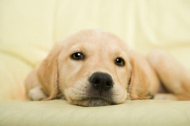 Lęk separacyjny u psów