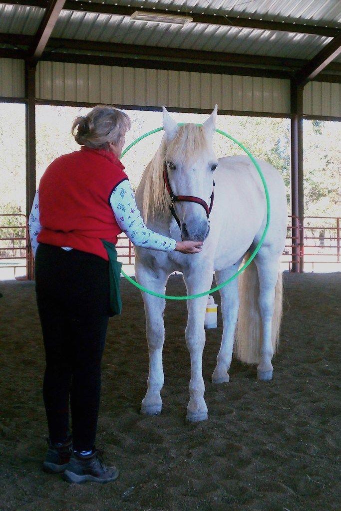 Horse clicker training Marinero and the hula hoop