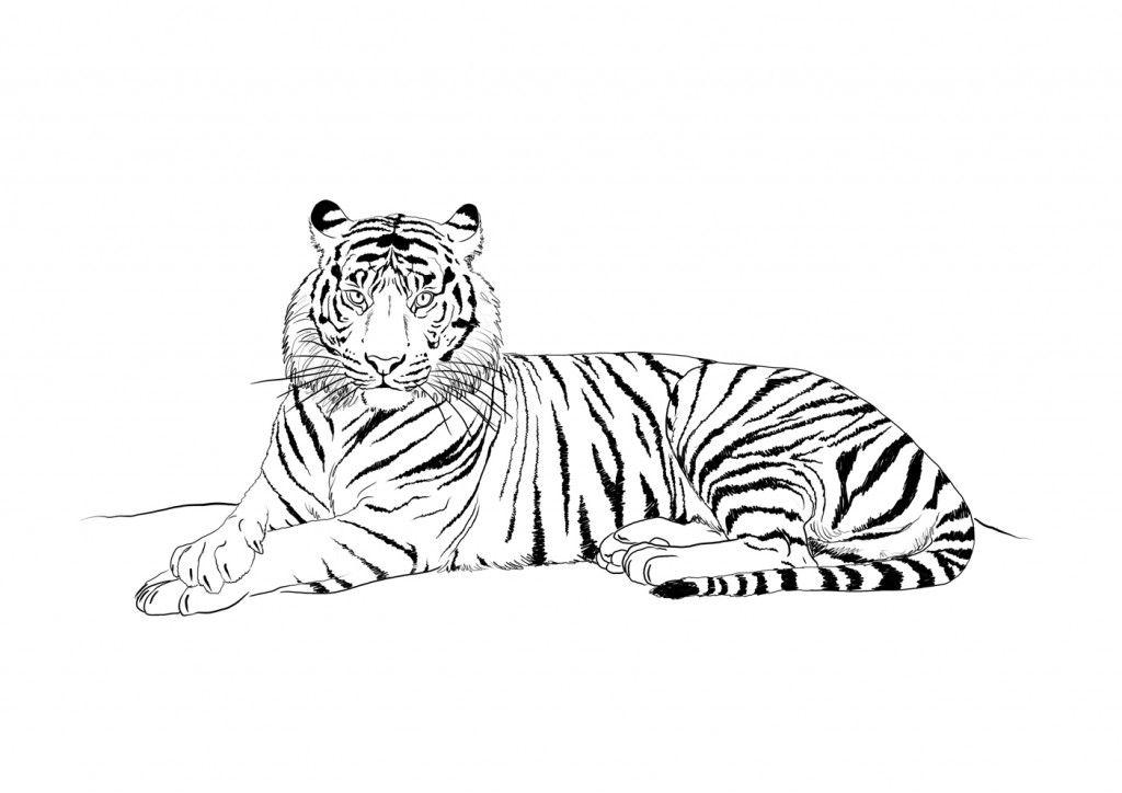 Coloriage tigre 1024 724 riscos pinterest - Coloriage tigre ...