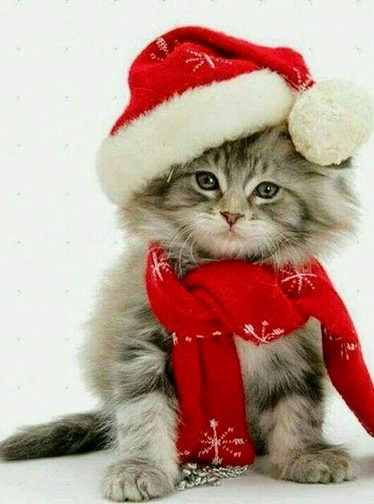 Photo of , #FunnyCat Christmas – Gatos