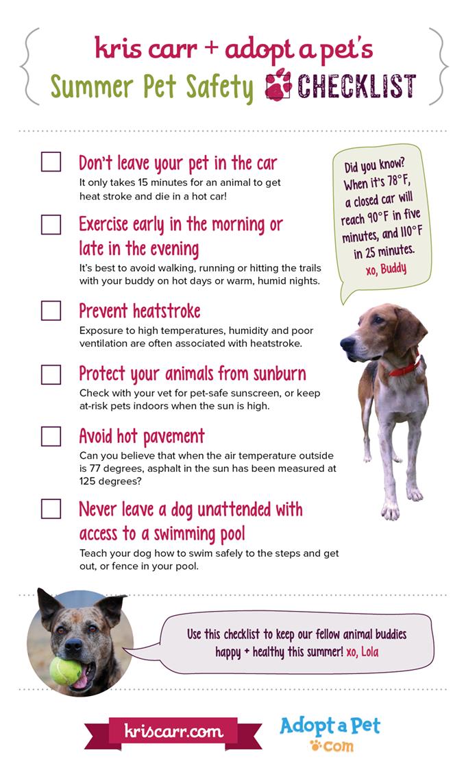 6 Summer Pet Safety Tips Heatstroke In Dogs Pet Car Safety More Pet Safety Pet Car Safety Pet Car