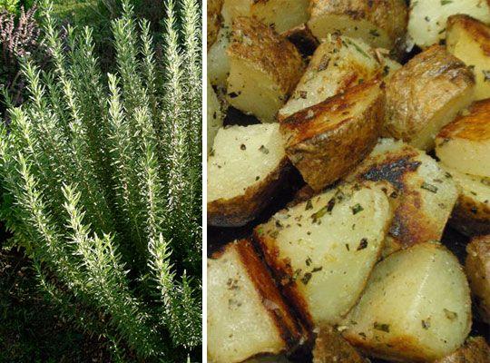 Rosemary Recipe: Pan Fried Rosemary Garlic Potatoes