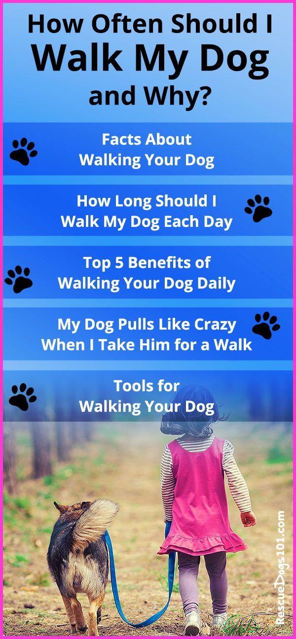 How Often Should I Walk My Dog And Why Dog Walking Dog