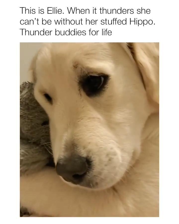 Thunder Buddies For Life😍💕👕👇🏿🙌🏿 (Black Dogs + Live