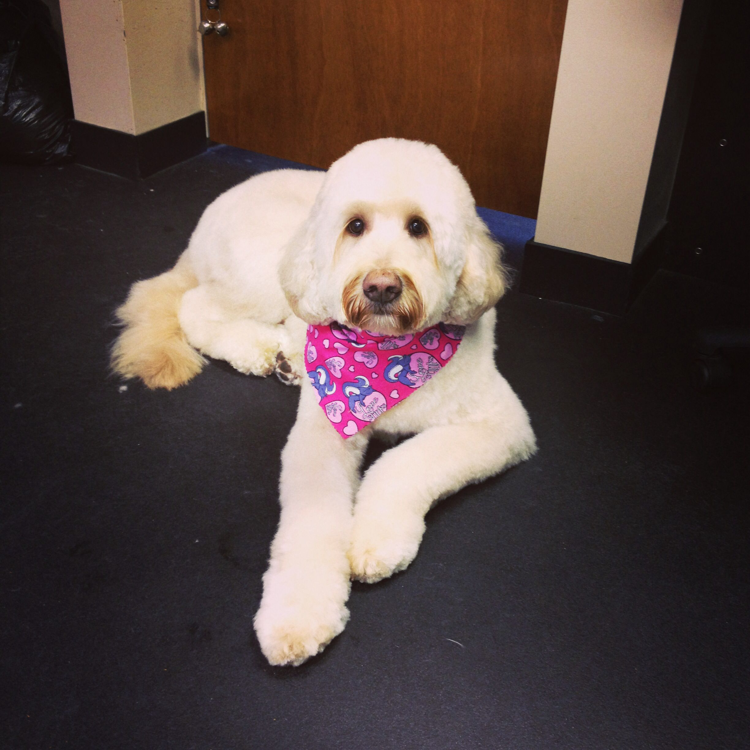 Pin On Sassy Paws Pet Styles Grooming