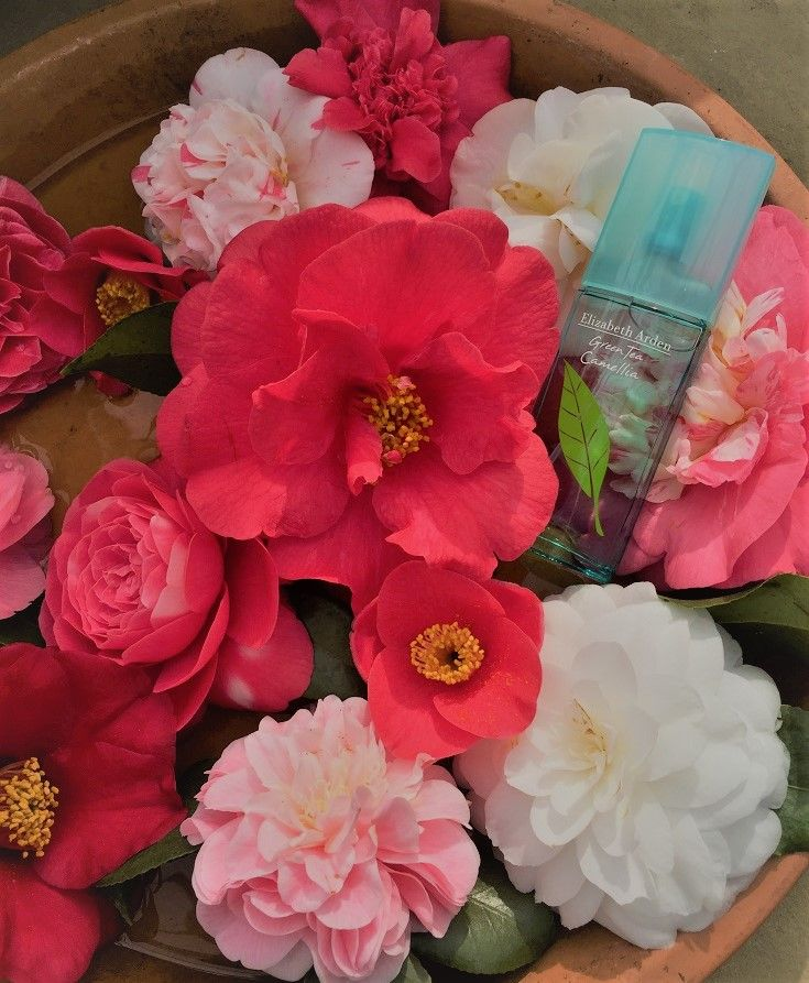 Perfume of the week… Elizabeth Arden Green Tea Camellia