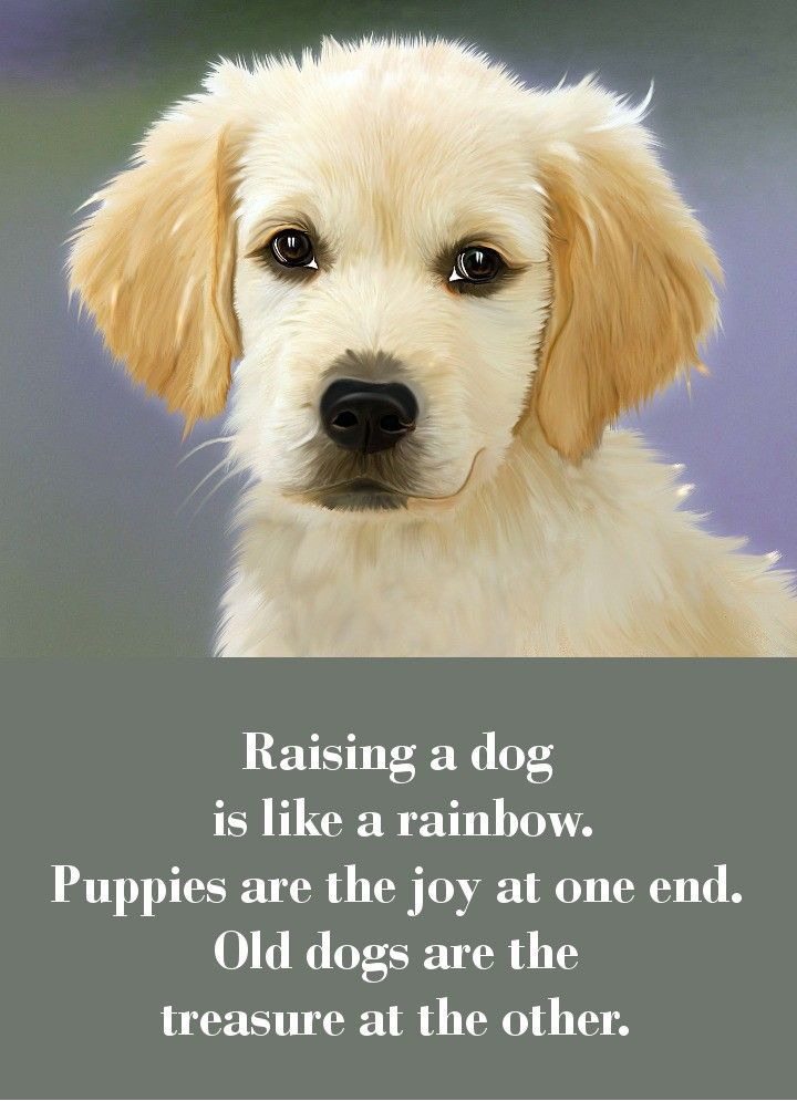42 Dog Sayings Which Will Touch Your Heart Dog Quotes Old Dogs Puppies