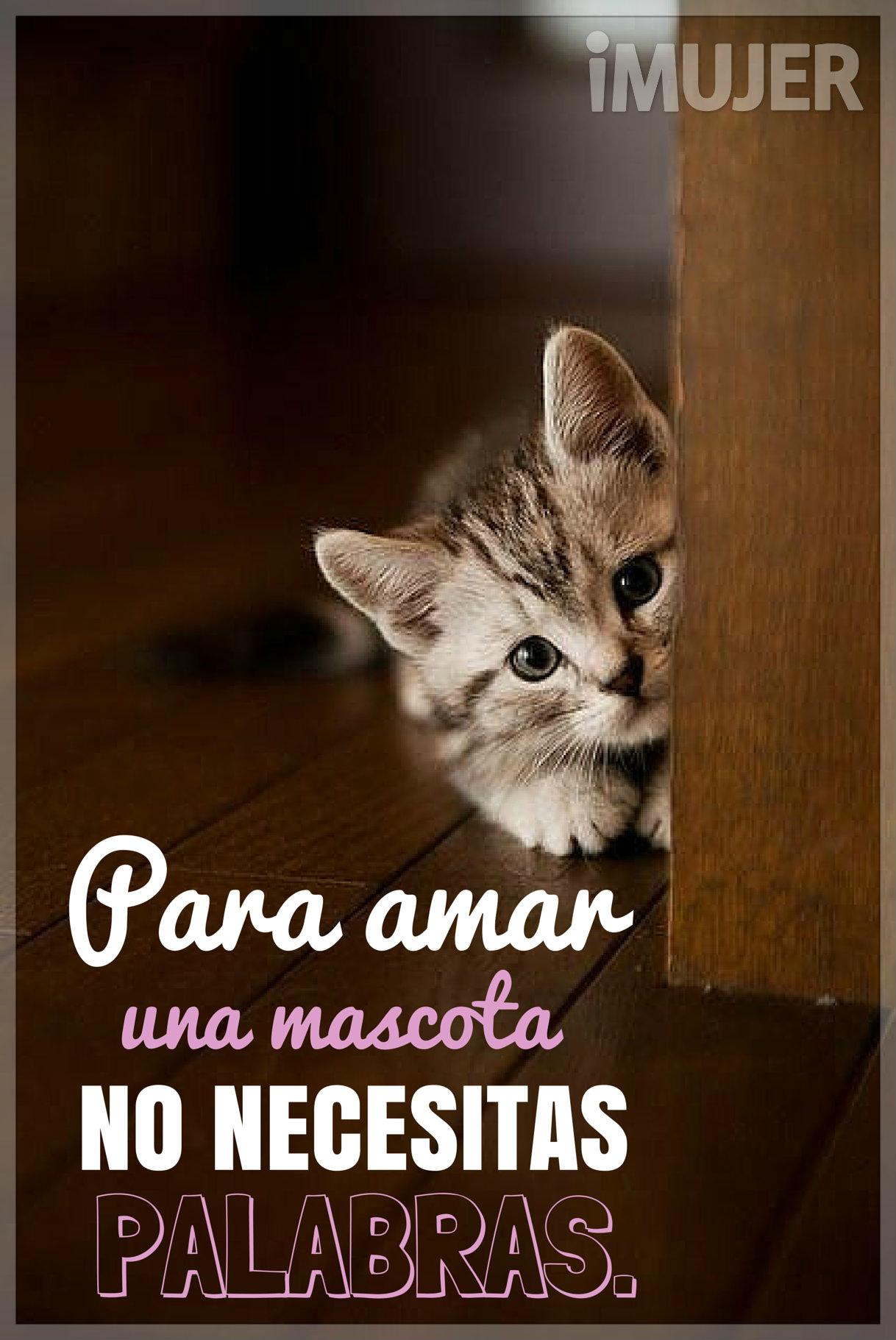 Frases Para #amar una #mascota no necesitas #palabras. | gatos ...