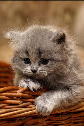 A basket!!!