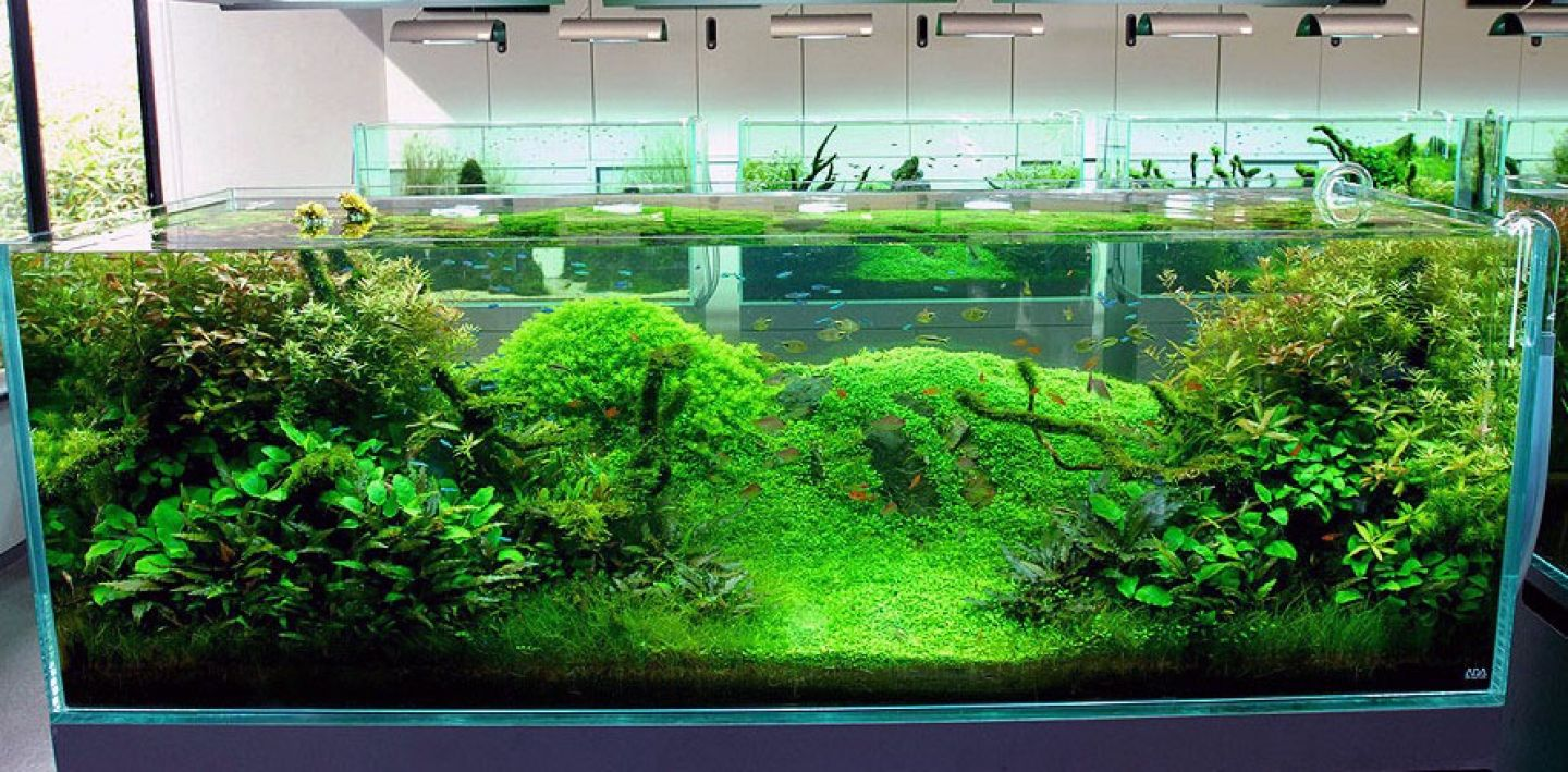 Freshwater aquarium odd fish - Fish Tank Ideas Cool Fish Tank Decoration Ideas Outstanding Nature Aquarium Design For