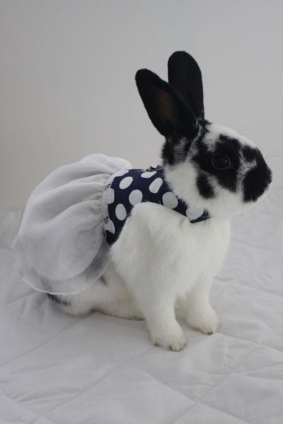 Polka dot navy and white harness dress with D-ring ...