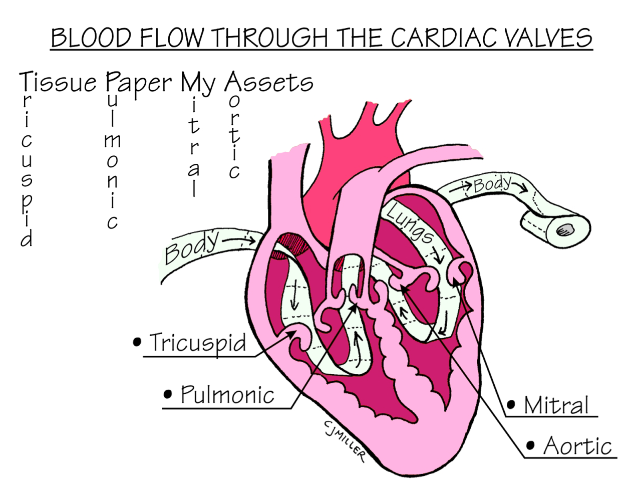 Mnemonic For Blood Flow Through Heart