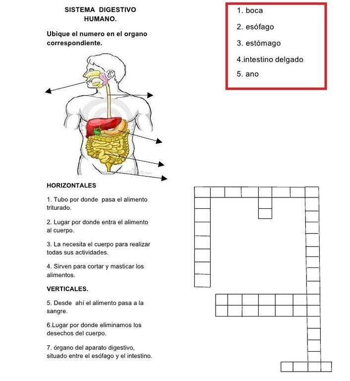 Manualidades del sistema digestivo para niños - Manualidades | para ...