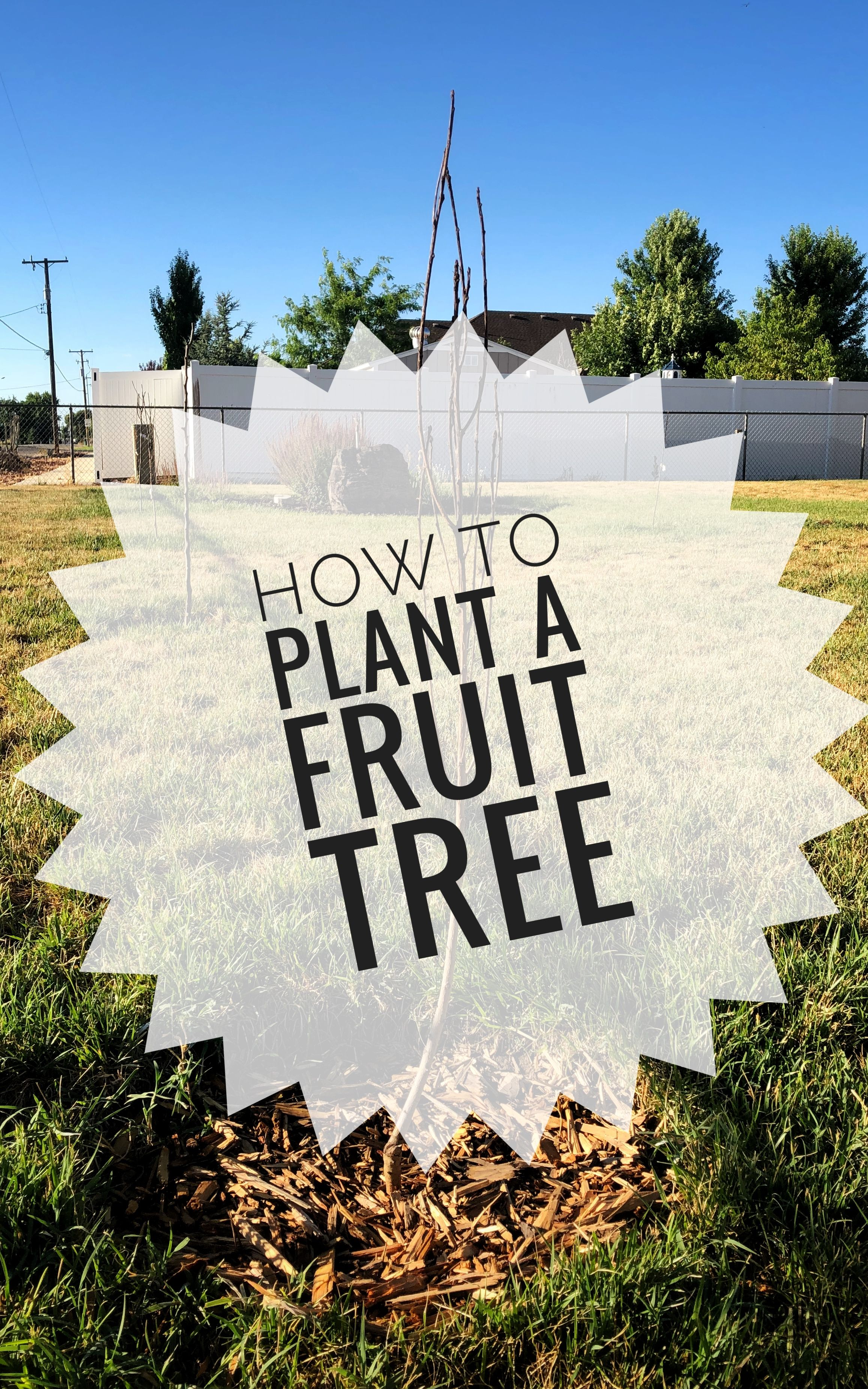 Learn How To Plant A Fruit Tree