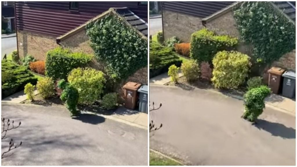 Neighbor Sneaks Out Of His House Dressed Like A Leafy Bush During The United Kingdom Lockdown House Dress Next Door Neighbor Next Door