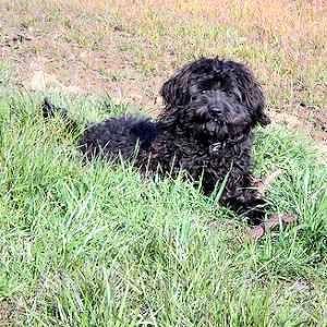 Dog Breed List B All Dog Breeds Beginning With The Letter B Large Dog Breeds Dog Breeds List Dog Breeds