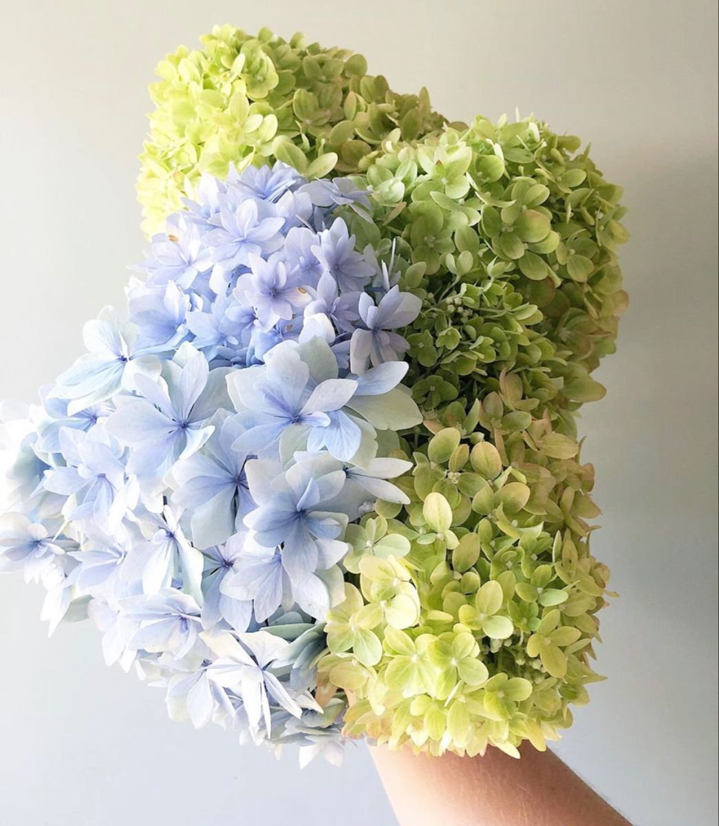 Hydrangea In 2020 Flowers For Sale Hydrangea Colors Wholesale Flowers