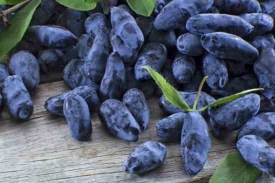 18 Berry Bushes To Grow In Your Yard How To Guides