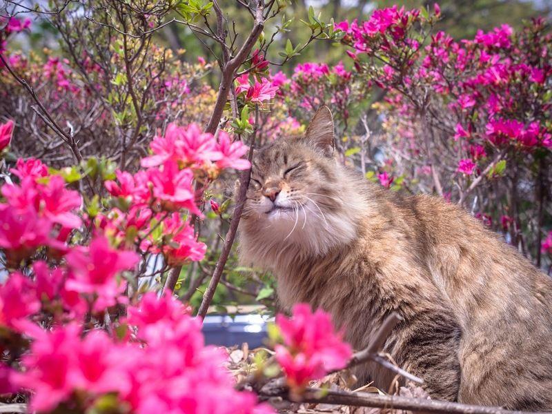 Cat amongst the Flowers - Beautiful!