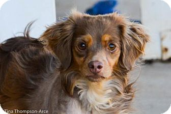 Pin By Beth Perry Davis On Doggies For Adopting Dachshund Mix