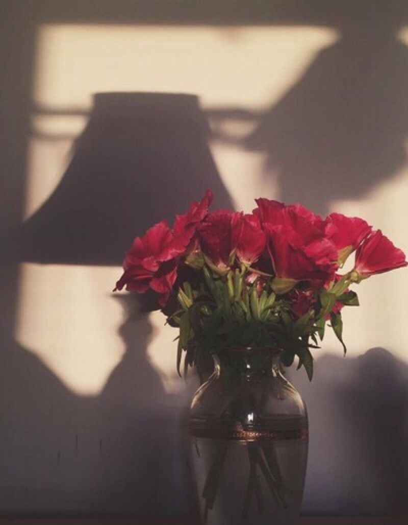 1-800-DID-I ASK   Red roses, Flowers, Petals