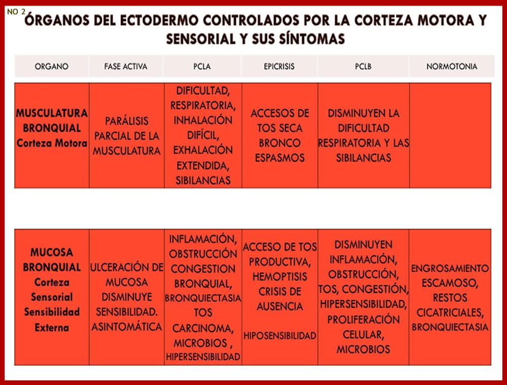 Atractivo Gato Diagrama De Los órganos Internos Ideas - Anatomía de ...