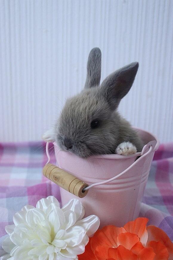 Account Suspended Cute Baby Bunnies Pet Bunny Cute Funny Animals