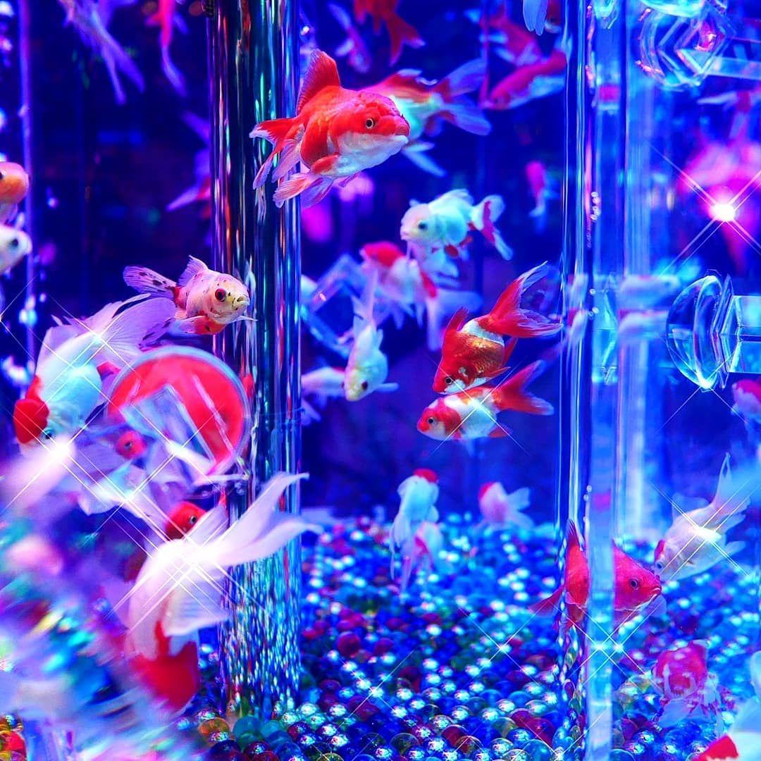 #アートアクアリウム #アートアクアリウム2019 #日本橋 #金魚 #涼 #風景写真 #風景 #水槽 #キリトリセカイ #カメラ好きな人と繋�%