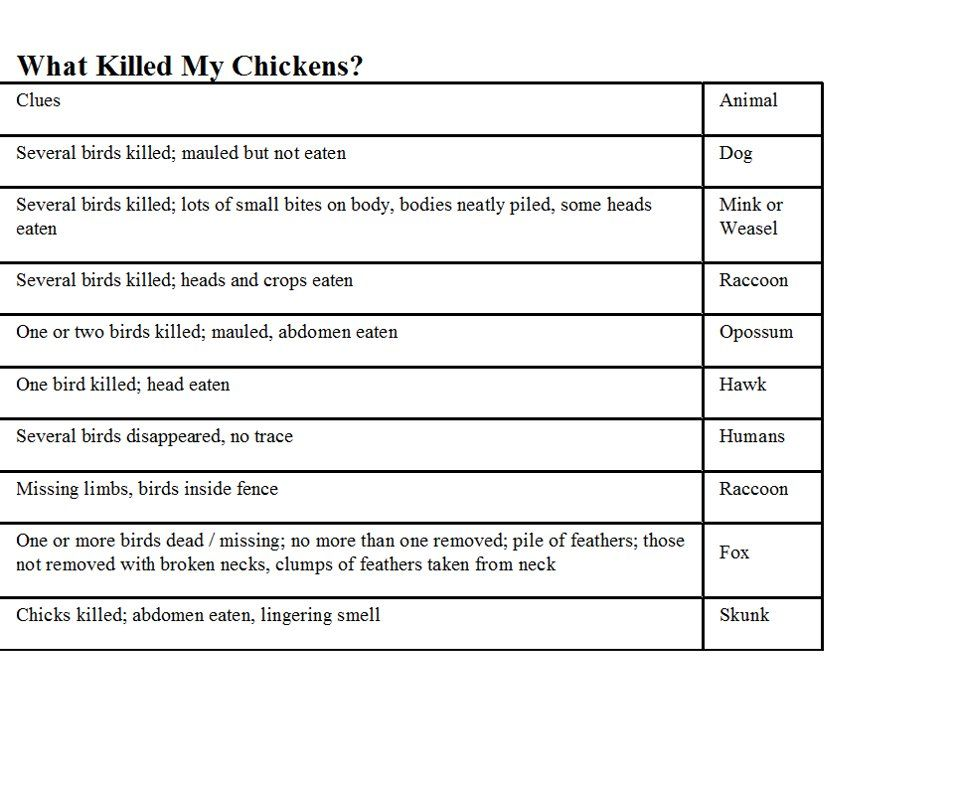 What killed my chickens  handy chart also pinterest rh