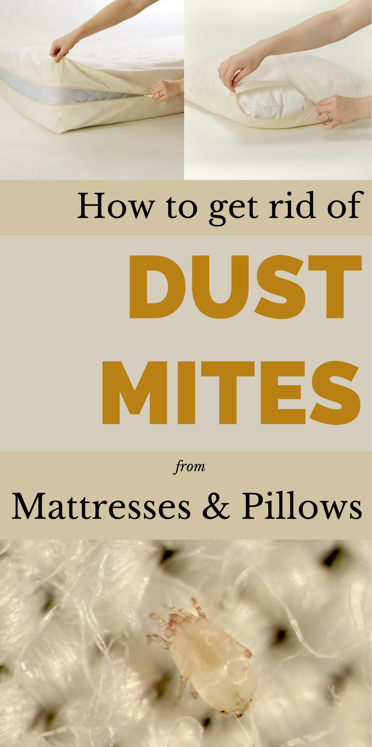 This Is The Best Method To Get Rid Of Dust Mites From Mattresses And Pillows Dust Mites Mattress Cleaning Clean Baking Pans