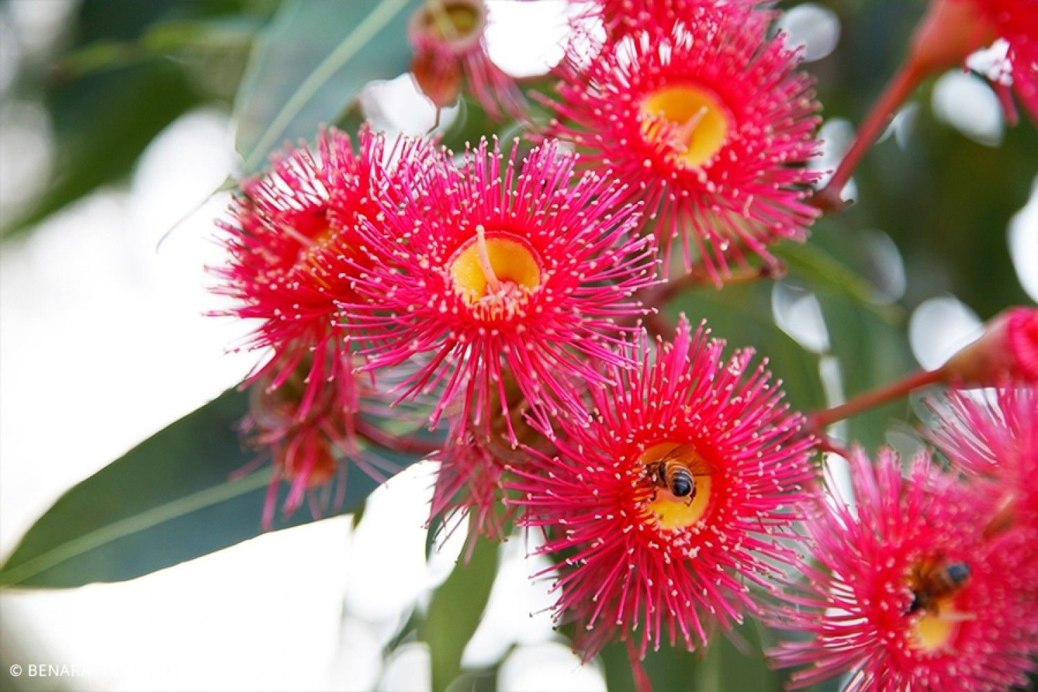 Pin by Aj on TAFE Botanical species, Types of flowers