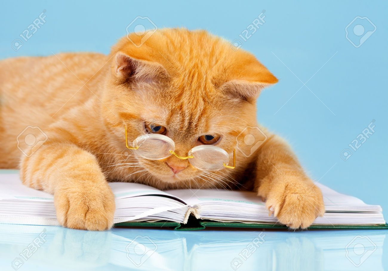Cute Business Cat Wearing Glasses Reading Notebook (book) Stock Photo, Picture And Royalty Free Image. Pic 34575951.